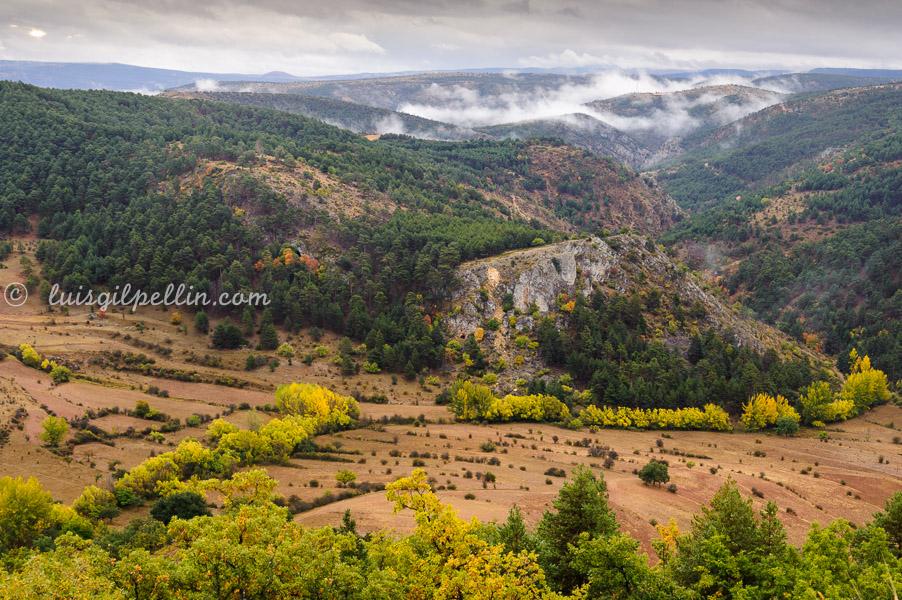 Tiempos de berrea - Sierra de Albarracín - Luis Antonio Gil  Pellín , Fotografia de naturaleza