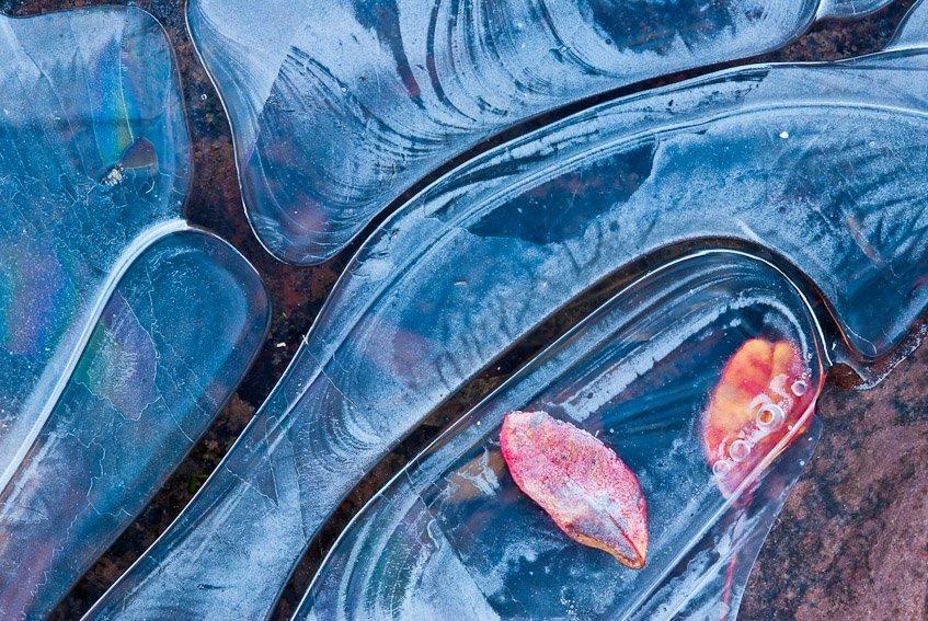 Juegos de hielo - Naturaleza intima - Luis Antonio Gil  Pellín , Fotografia de naturaleza