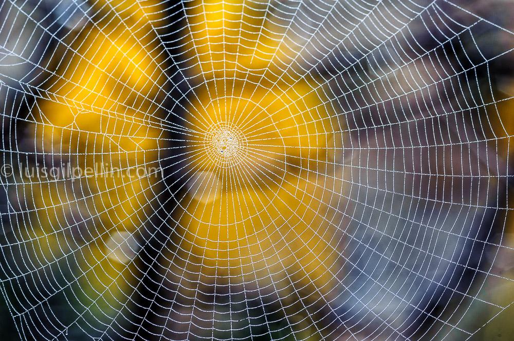 Red de otoño - Ultimas imagenes - Luis Antonio Gil  Pellín , Fotografie della natura