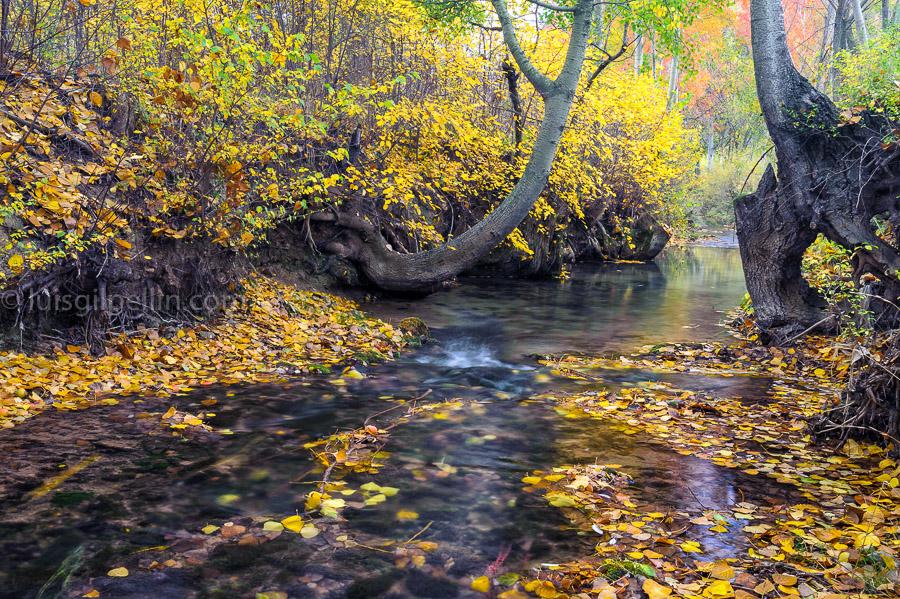 Otoño en el rio Blanco - Sierra de Albarracín - Luis Antonio Gil  Pellín , Fotografia de naturaleza