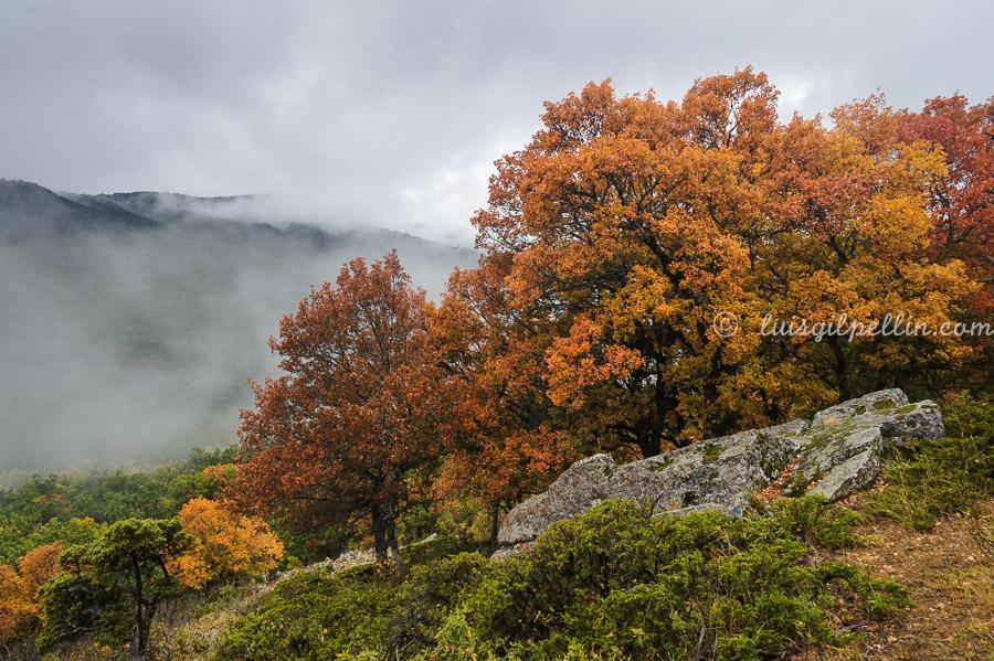 Dias de berrea - Sierra de Albarracín - Luis Antonio Gil  Pellín , Fotografia de naturaleza