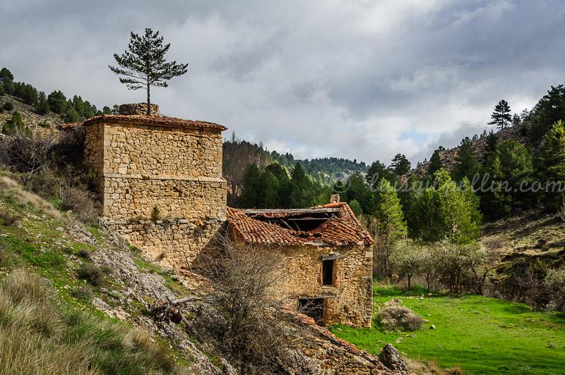 Un pino en el tejado - Sierra de Albarracín - Luis Antonio Gil  Pellín , Fotografia de naturaleza