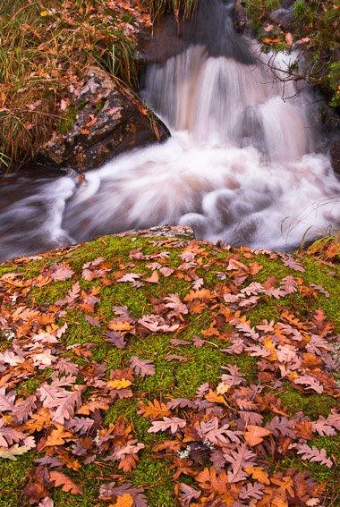 Arroyo de montaña - Sierra de Albarracín - Luis Antonio Gil  Pellín , Fotografia de naturaleza