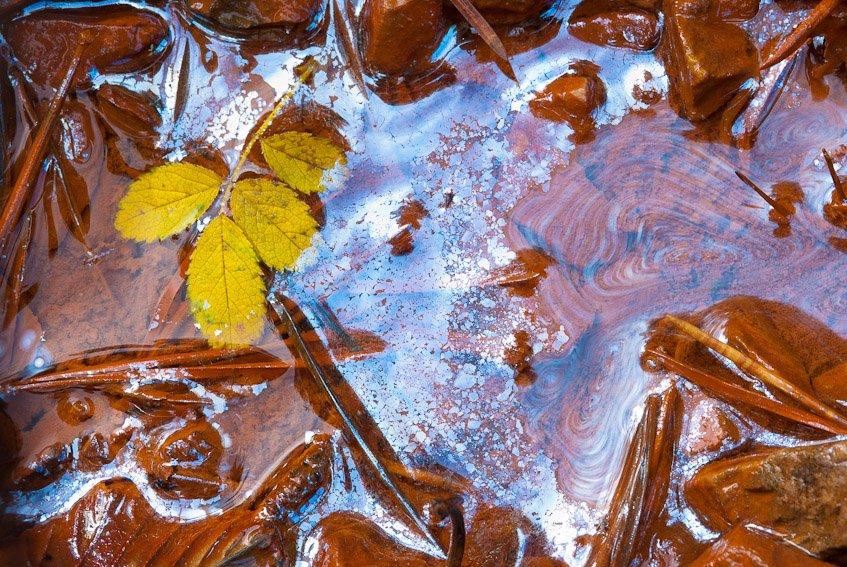 Agua de otoño - Naturaleza intima - Luis Antonio Gil  Pellín , Fotografia de naturaleza