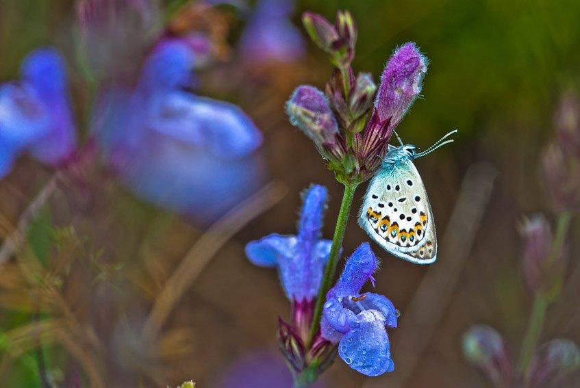 Mariposa en el pinar - Mundo macro - Luis Antonio Gil  Pellín , Fotografia de naturaleza