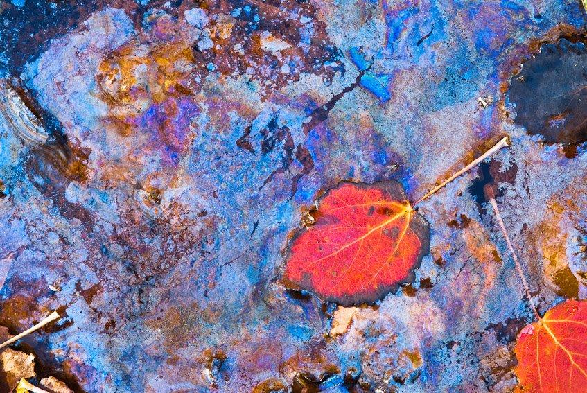 Baño de color - Naturaleza intima - Luis Antonio Gil  Pellín , Fotografia de naturaleza