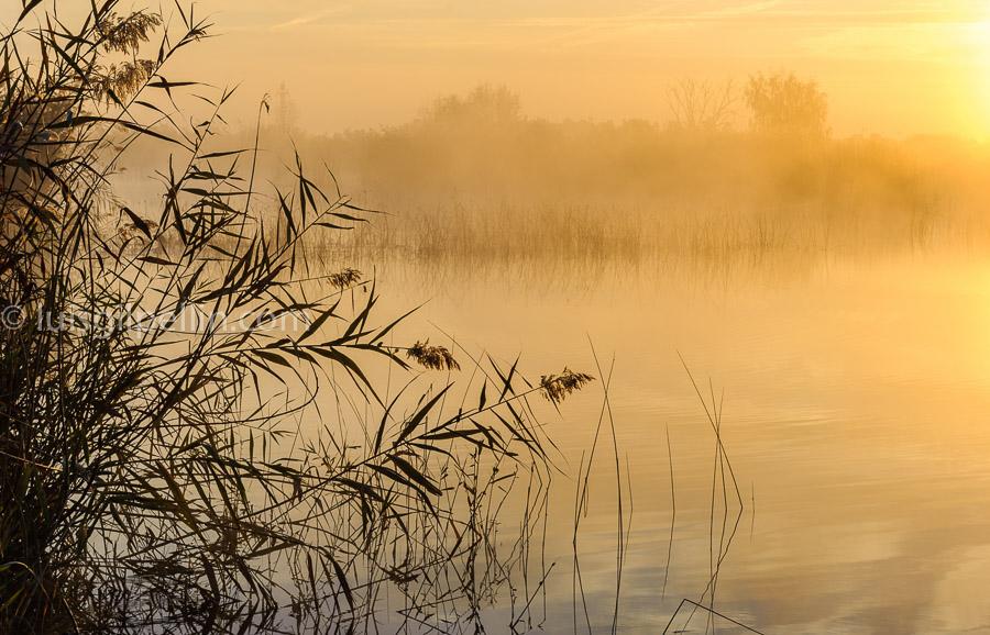 Luz matinal - Buscando la luz - Luis Antonio Gil  Pellín , Fotografia de naturaleza
