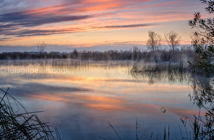 La hora del pato - Buscando la luz - Luis Antonio Gil  Pellín , Fotografia de naturaleza