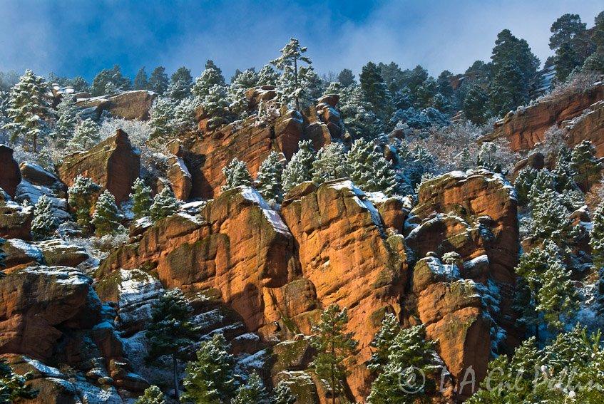 Ventisca en el pinar - Sierra de Albarracín - Luis Antonio Gil  Pellín , Fotografia de naturaleza