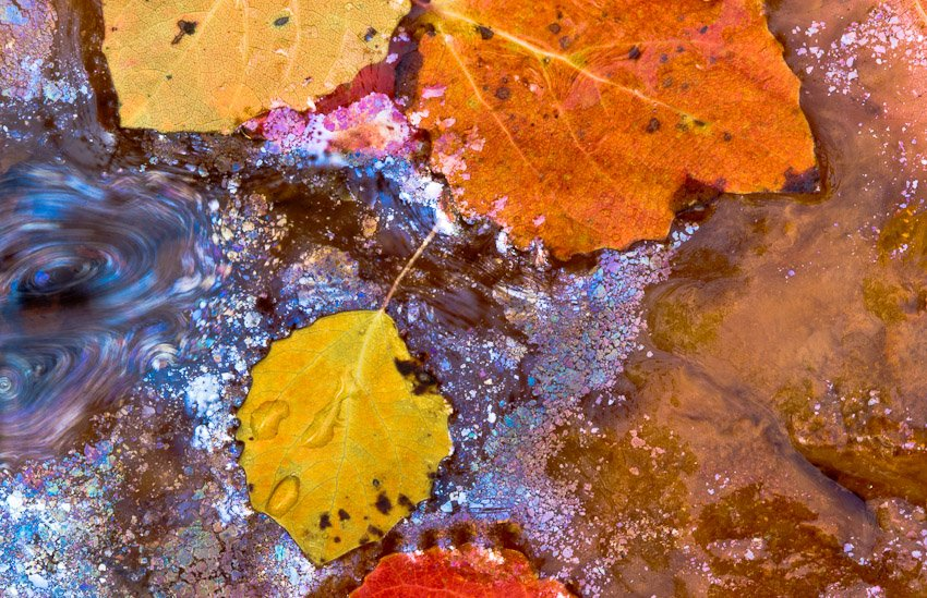 Hojas de otoño - Naturaleza intima - Luis Antonio Gil  Pellín , Fotografie della natura