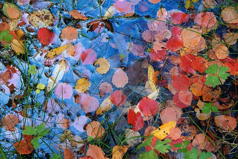Tapiz de otoño - Naturaleza intima - Luis Antonio Gil  Pellín , Fotografia de naturaleza
