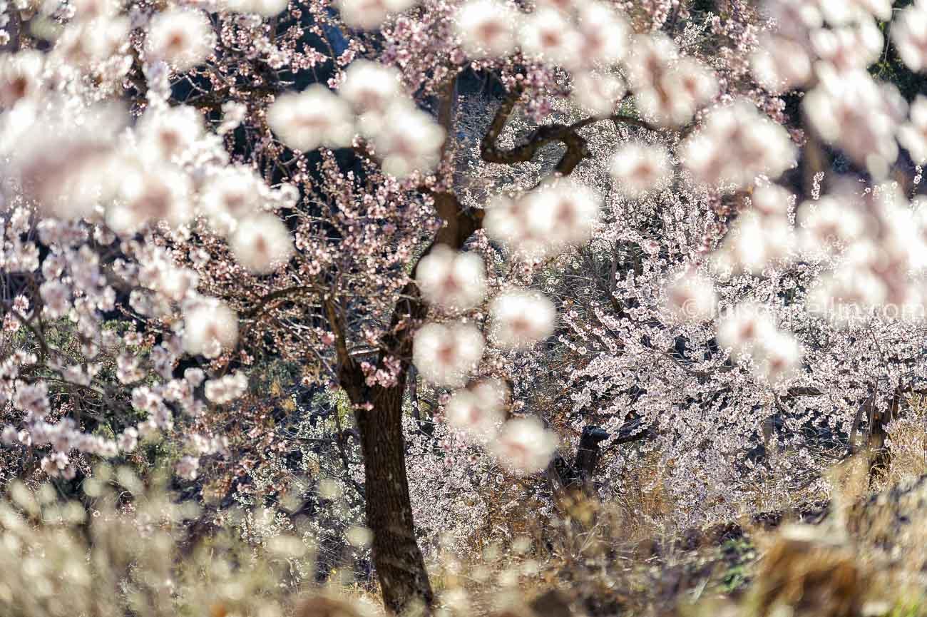Floración - Ultimas imagenes - Luis Antonio Gil  Pellín , Photographies de la nature