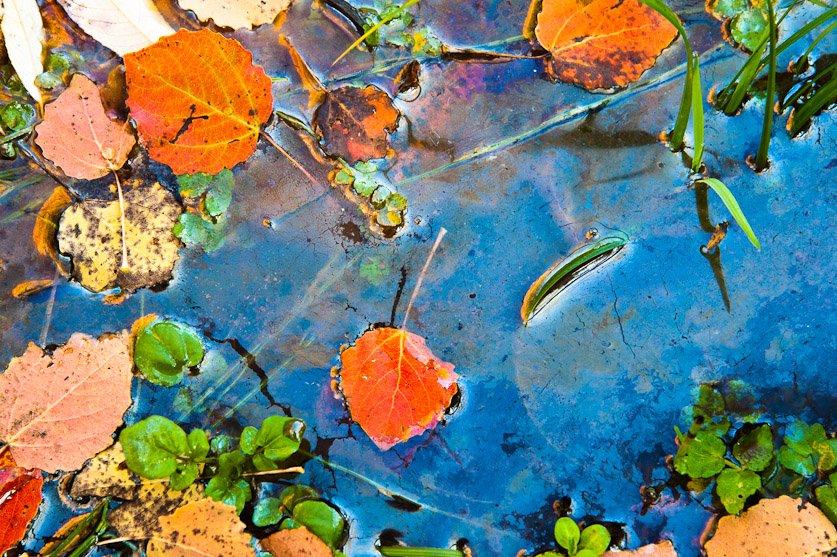 Charquito - Naturaleza intima - Luis Antonio Gil  Pellín , Fotografia de naturaleza