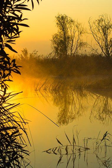 El estanque dorado  - Buscando la luz - Luis Antonio Gil  Pellín , Fotografia de naturaleza