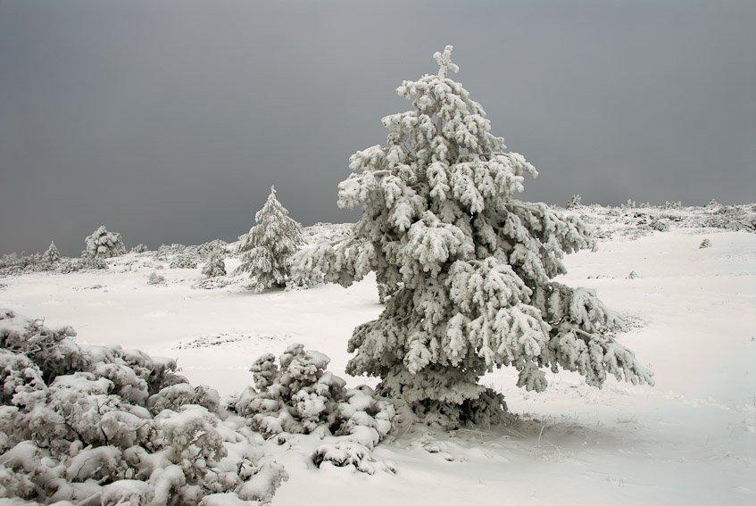 Invierno - Buscando la luz - Luis Antonio Gil  Pellín , Fotografia de naturaleza