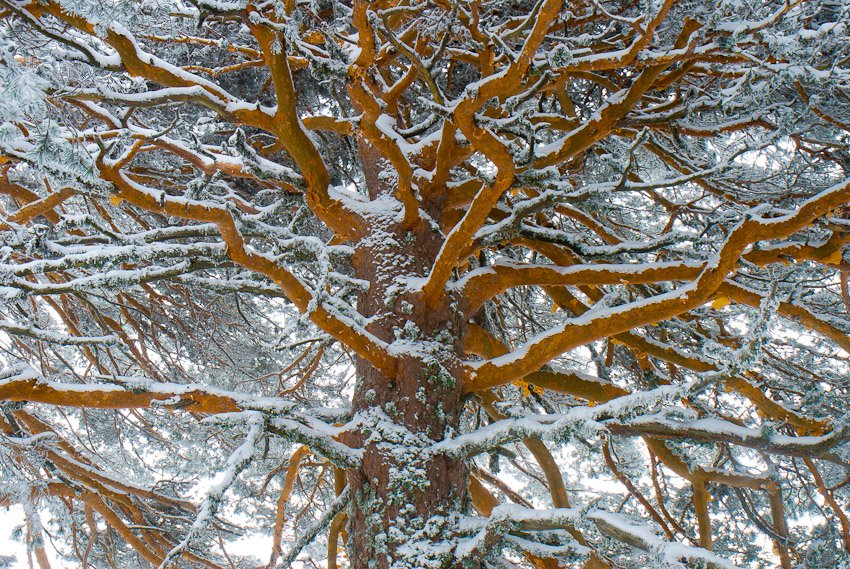 Las arterias de Neila - Buscando la luz - Luis Antonio Gil  Pellín , Fotografia de naturaleza