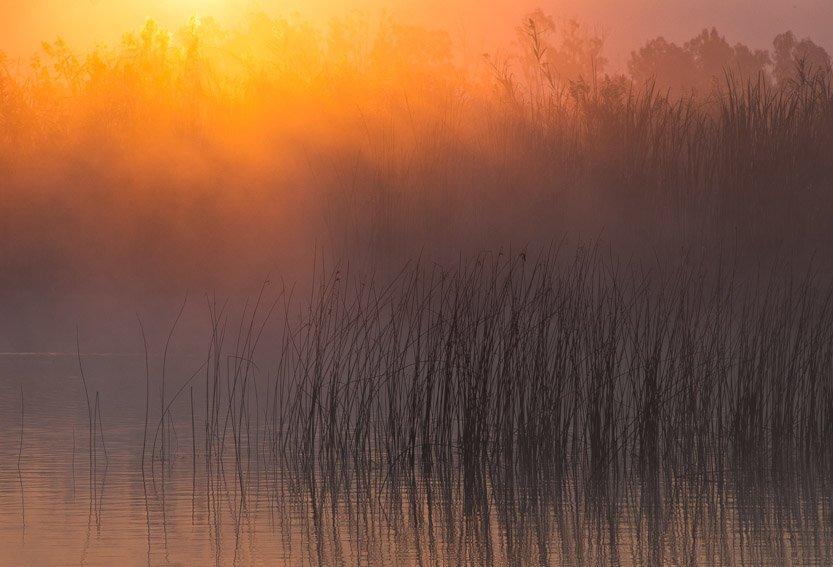 Amanecer en la marjal - Buscando la luz - Luis Antonio Gil  Pellín , Fotografia de naturaleza