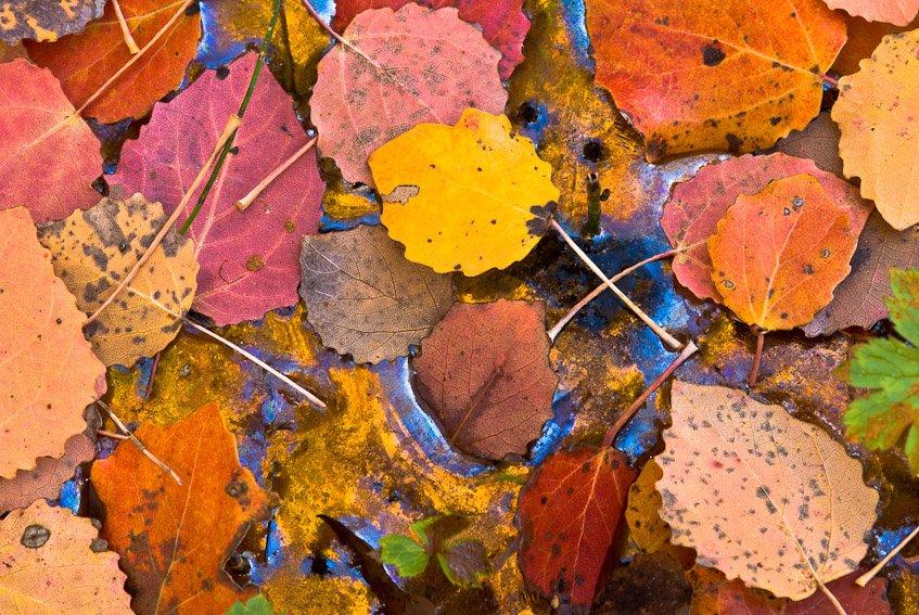 Puzzle - Naturaleza intima - Luis Antonio Gil  Pellín , Fotografia de naturaleza