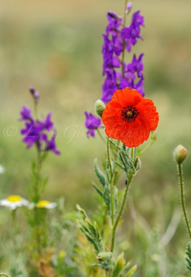 Flores en el piazo - Mundo vegetal - Luis Antonio Gil  Pellín , Fotografia de naturaleza