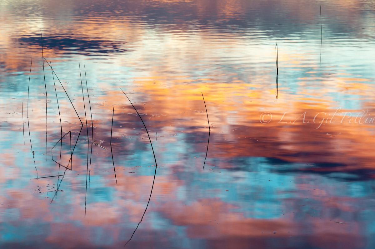 Aguas del la mañana - Naturaleza intima - Luis Antonio Gil  Pellín , Fotografia de naturaleza