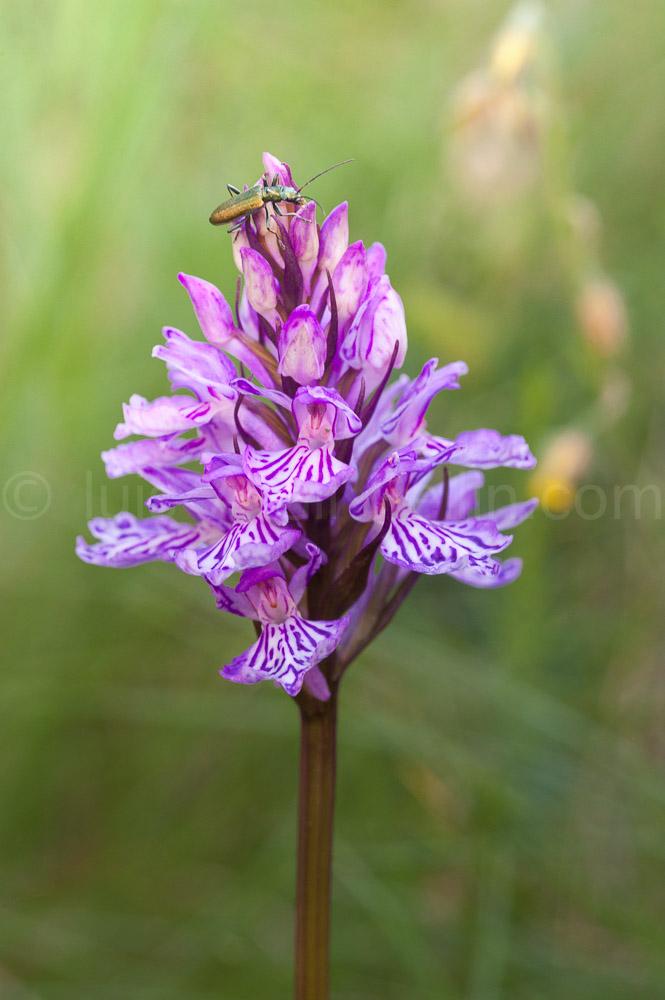 Orquidea - Mundo macro - Luis Antonio Gil  Pellín , Fotografia de naturaleza