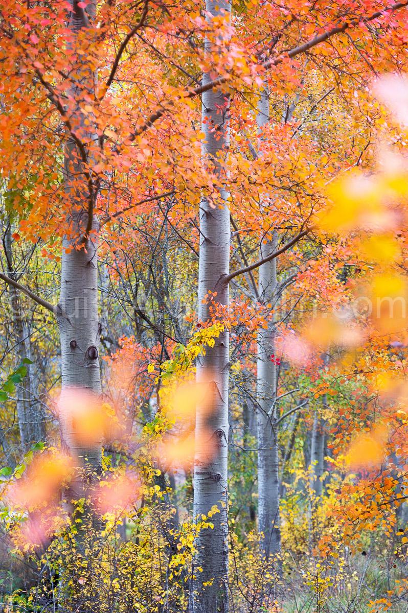 Pinceladas de otoño - Ultimas imagenes - Luis Antonio Gil  Pellín , Fotografia de naturaleza