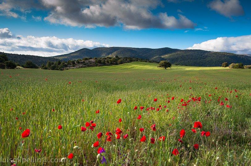 Primavera - Sierra de Albarracín - Luis Antonio Gil  Pellín , Fotografia de naturaleza