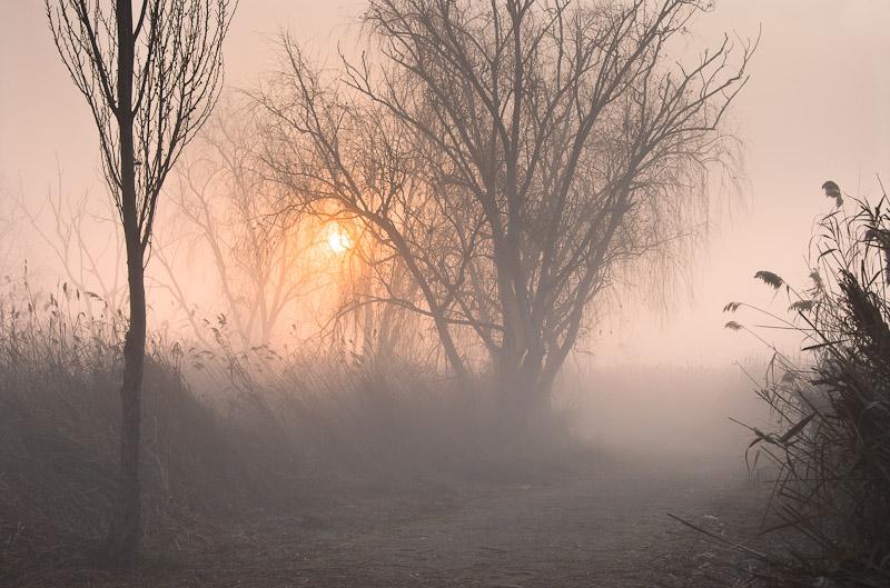 En la niebla - Buscando la luz - Luis Antonio Gil  Pellín , Fotografia de naturaleza
