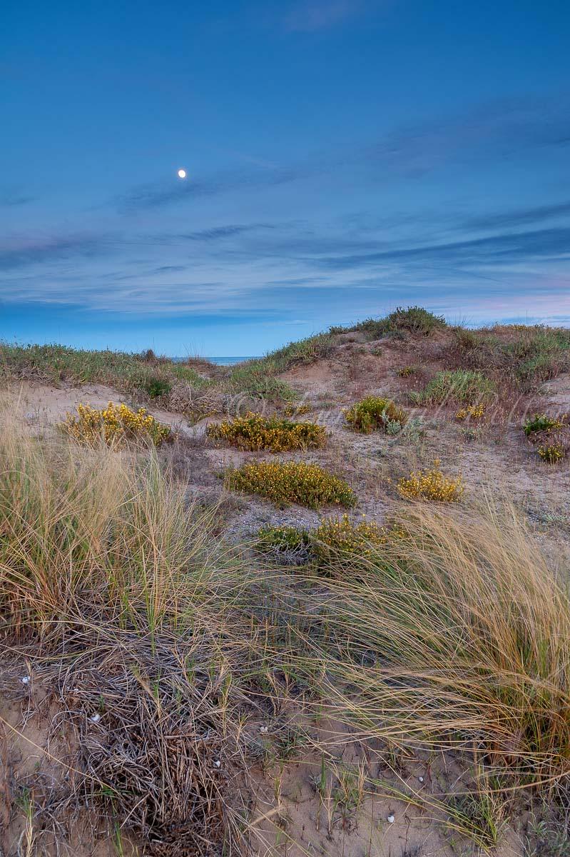 Nocturna en las dunas - Buscando la luz - Luis Antonio Gil  Pellín , Fotografia de naturaleza