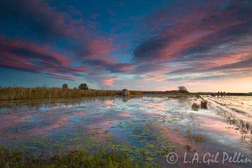 En la marjal  - Buscando la luz - Luis Antonio Gil  Pellín , Fotografia de naturaleza
