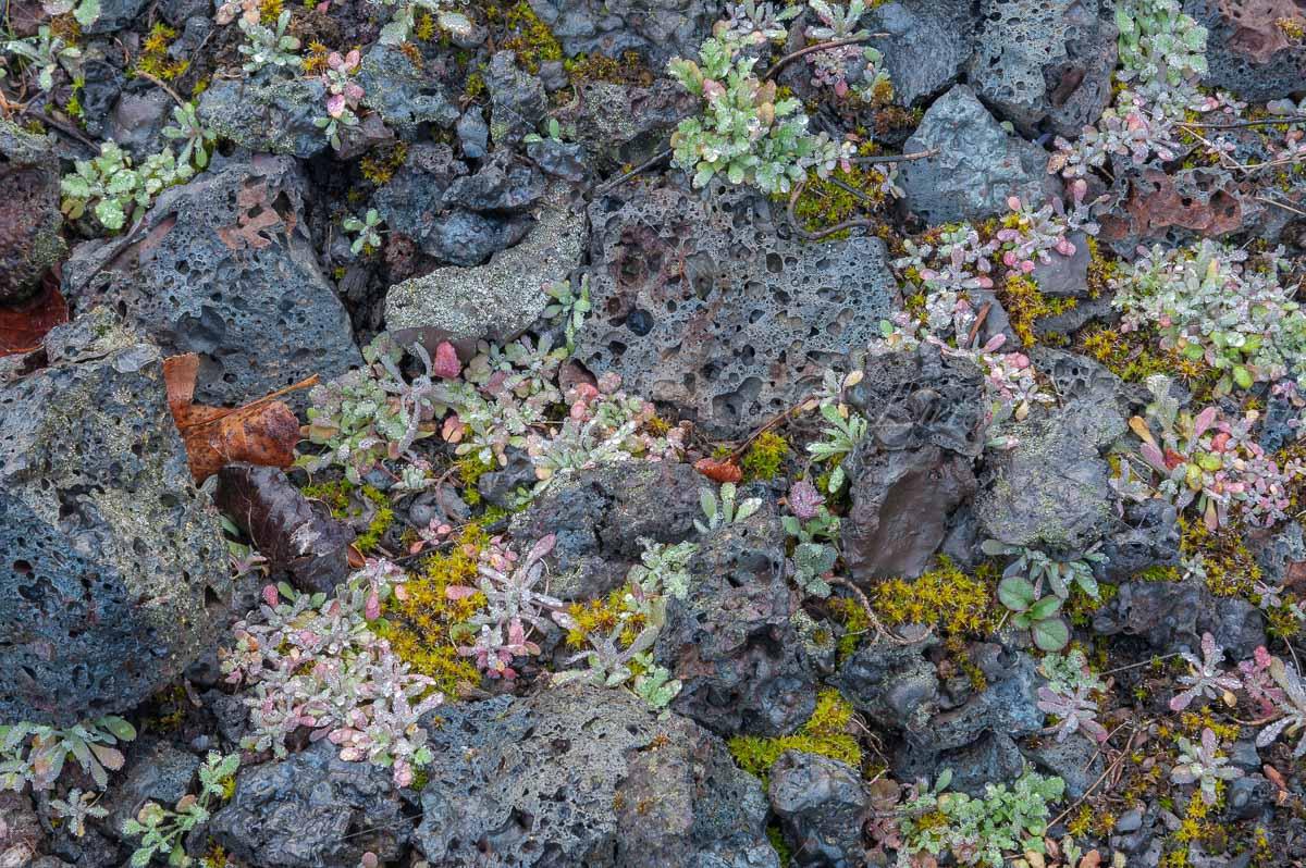 Rupicolas - Mundo vegetal - Luis Antonio Gil  Pellín , Fotografia de naturaleza