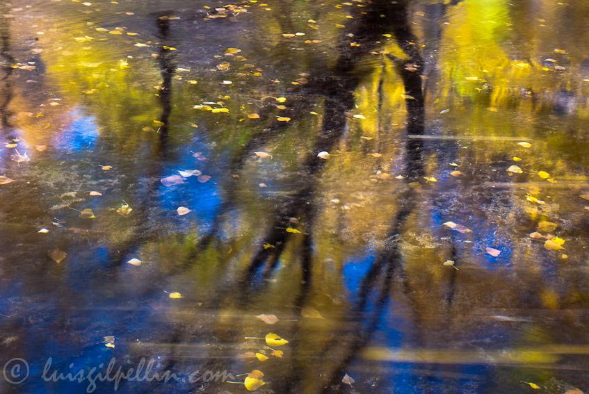 Impresion - Buscando la luz - Luis Antonio Gil  Pellín , Fotografia de naturaleza