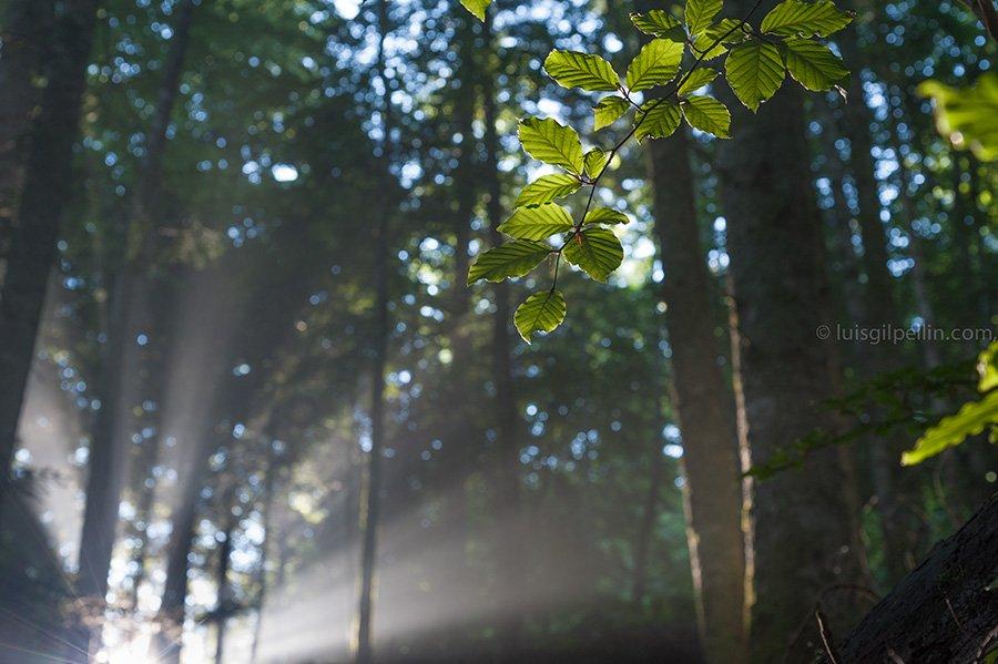 Luces de Irati - Buscando la luz - Luis Antonio Gil  Pellín , Fotografia de naturaleza
