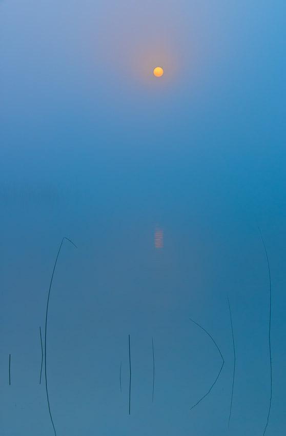 Esencia - Buscando la luz - Luis Antonio Gil  Pellín , Fotografia de naturaleza