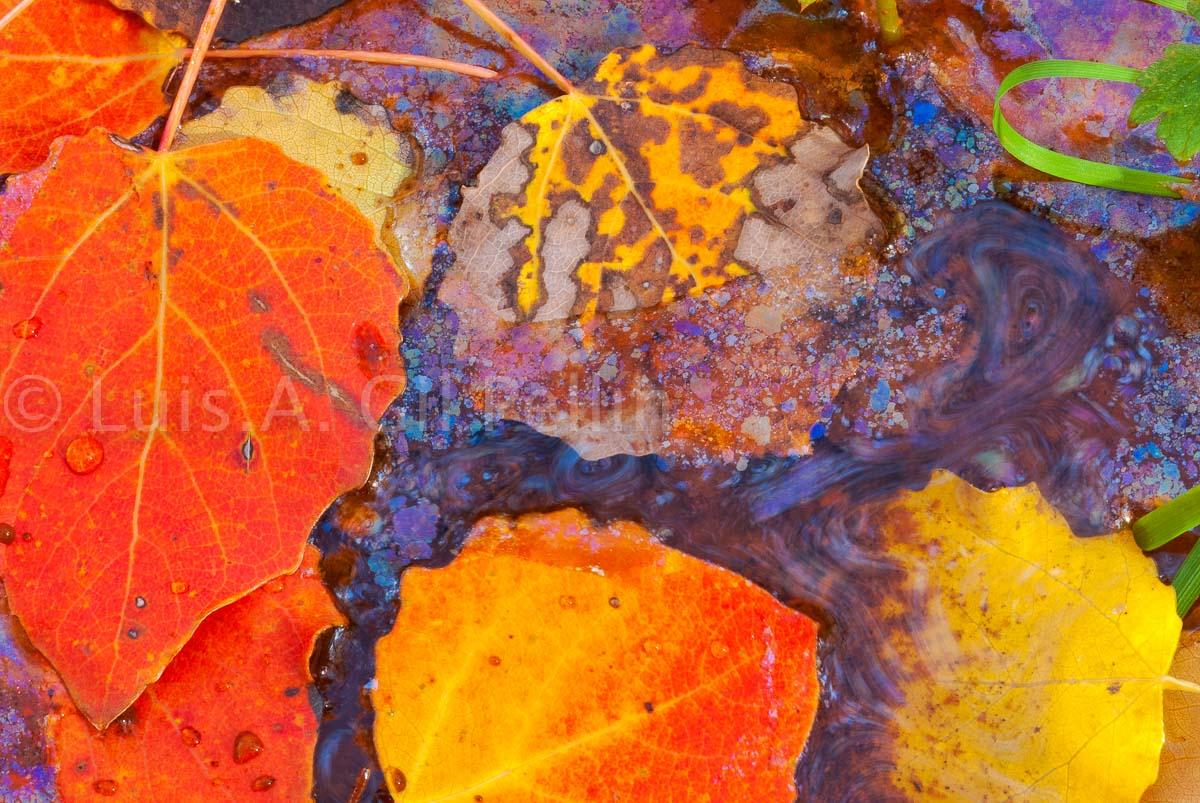 Caja de colores - Naturaleza intima - Luis Antonio Gil  Pellín , Fotografia de naturaleza