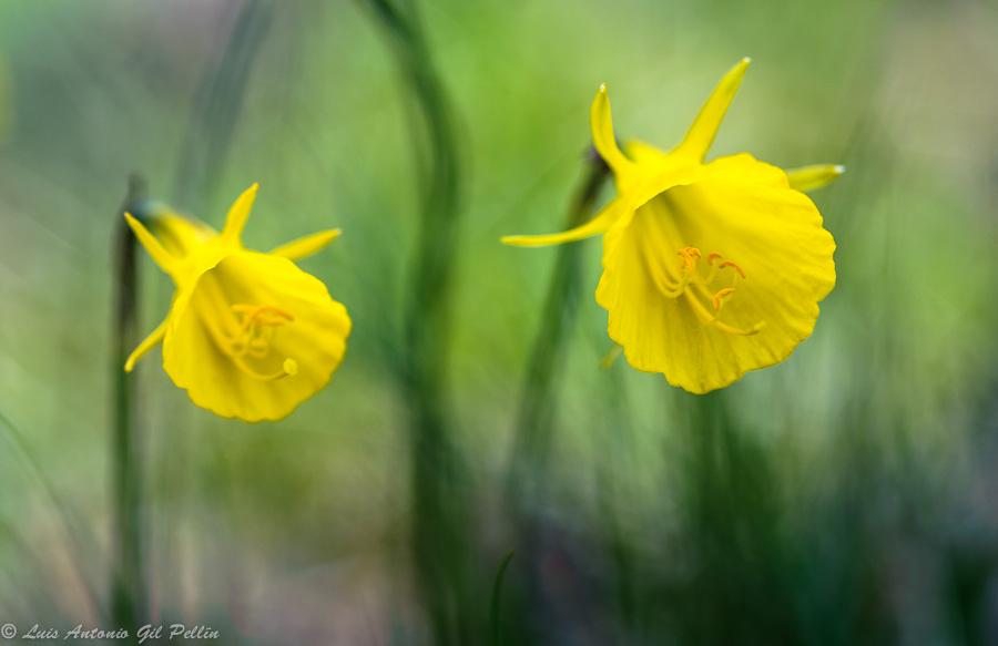Alegria en el pinar - Mundo vegetal - Luis Antonio Gil  Pellín , Fotografia de naturaleza