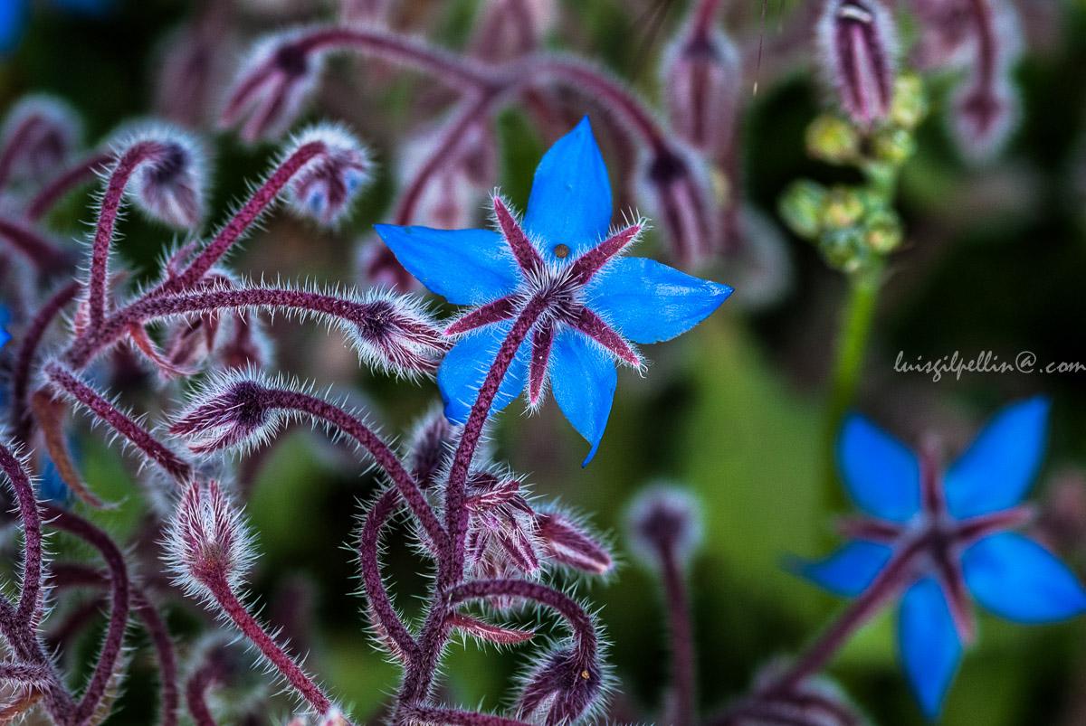 Una humilde flor - Mundo vegetal - Luis Antonio Gil  Pellín , Fotografia de naturaleza