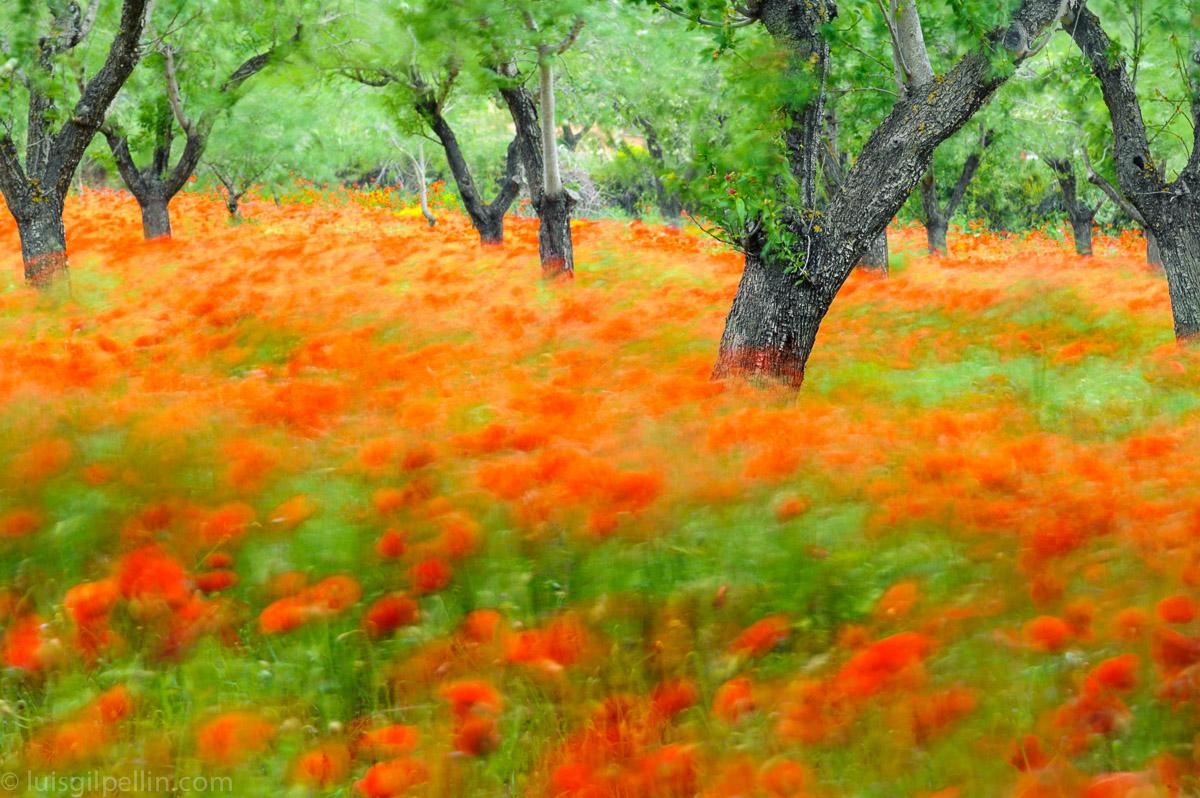 El Baile - Mundo vegetal - Luis Antonio Gil  Pellín , Fotografia de naturaleza
