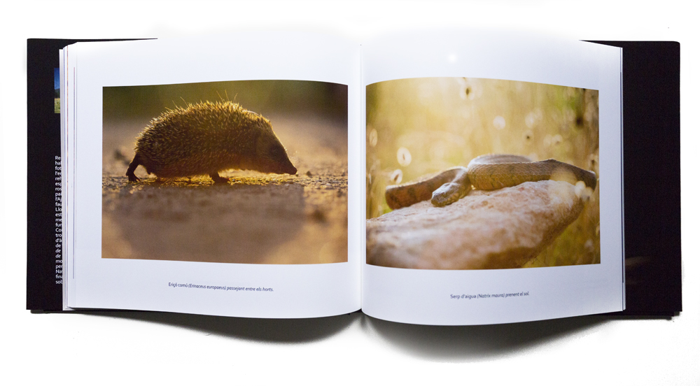 Libros - MADRENYS, PHOTOGRAPHY