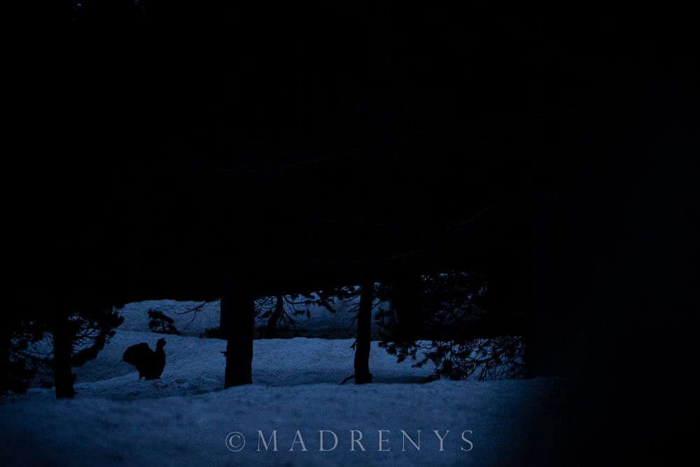 TÉTRAS - MADRENYS, PHOTOGRAPHY