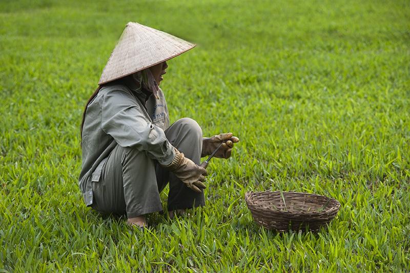vietnam - Manuel Fité, Fotografía