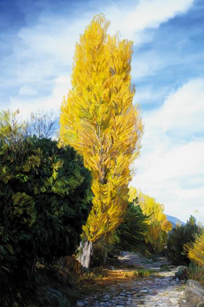 fotos pintadas - Manuel Fité, Fotografía