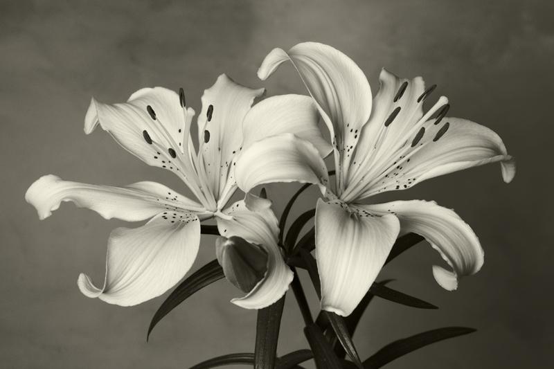 flores bn - Manuel Fité, Fotografía