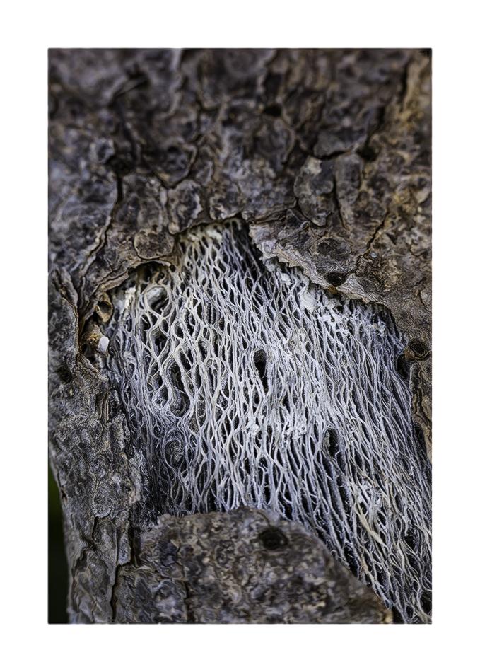 La Cochinilla del Carmín - MVilches , Fotográfia