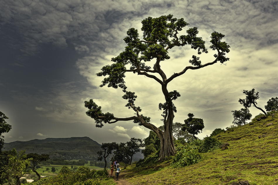 Hacia las Cataratas - Paisajes - MVilches , Fotográfia