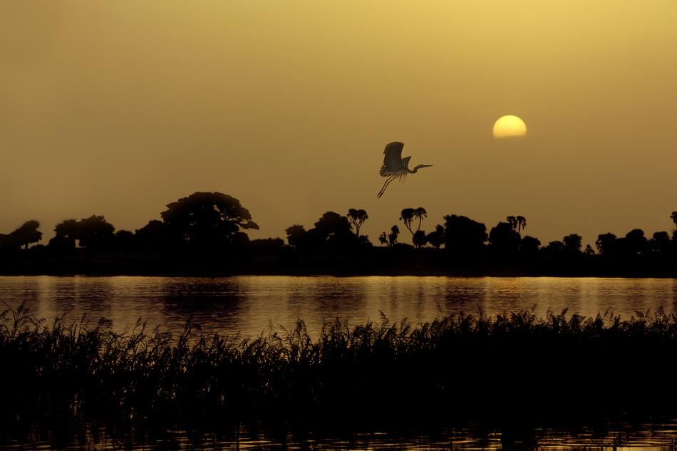 El vuelo - El río - MVilches , Fotográfia