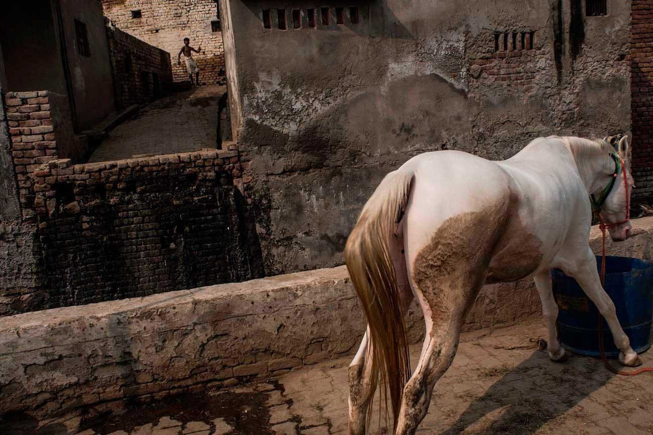 INICIO - MARCELO CABALLERO, PHOTOGRAPHY