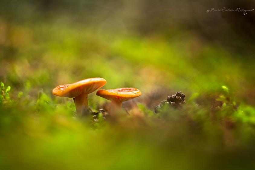 Fungi - Marta Roldán Melgosa, Fotografía