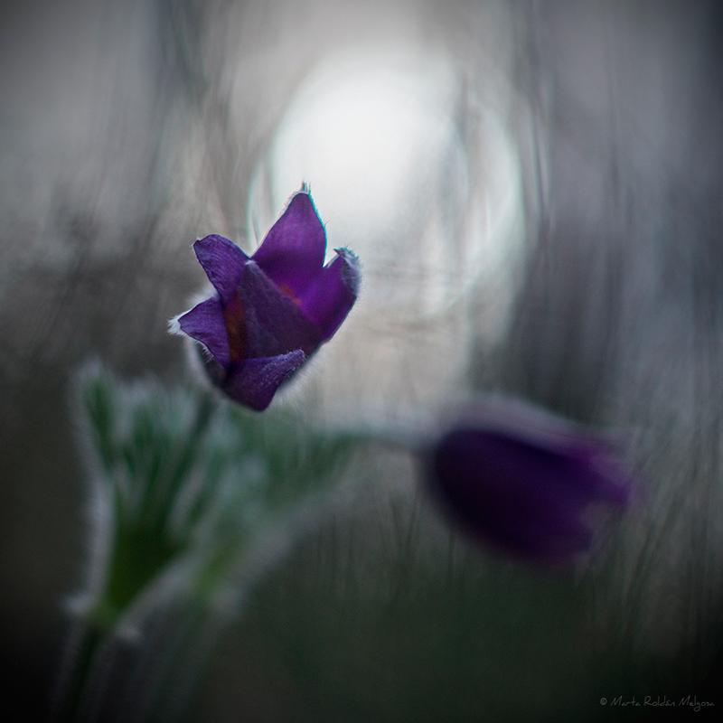 Flora - Marta Roldán Melgosa, Fotografía