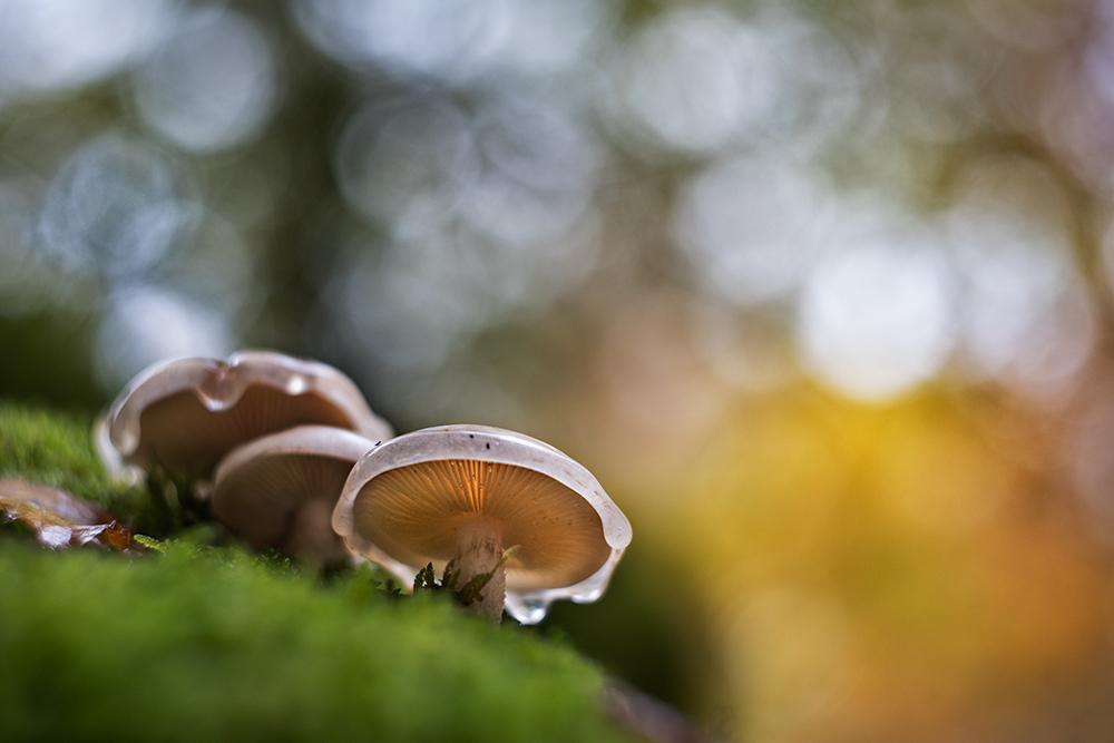 El mundo de lo diminuto - Marta Roldán Melgosa, Fotografía